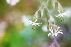 Μαγικά wildflowers Στοκ φωτογραφίες με δικαίωμα ελεύθερης χρήσης