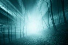 Μαγικές μπλε ακτίνες ήλιων χρώματος στο ομιχλώδες δάσος Στοκ εικόνα με δικαίωμα ελεύθερης χρήσης