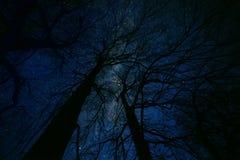 Μαγική έναστρη νύχτα νεράιδων Στοκ Φωτογραφία