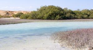 Μαγική λίμνη στην Αίγυπτο Στοκ εικόνα με δικαίωμα ελεύθερης χρήσης