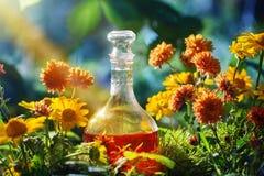 Μαγική φίλτρο στο μπουκάλι στο δάσος στοκ εικόνα με δικαίωμα ελεύθερης χρήσης