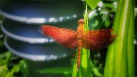μαγική φύση φτερών Στοκ φωτογραφία με δικαίωμα ελεύθερης χρήσης