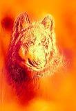 Μαγικός διαστημικός λύκος, πολύχρωμο γραφικό κολάζ υπολογιστών Επίδραση μετάλλων και πυρκαγιάς απεικόνιση αποθεμάτων