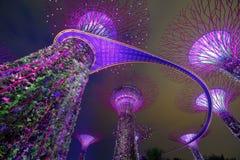 Μαγικός κήπος τη νύχτα, Σιγκαπούρη Στοκ φωτογραφία με δικαίωμα ελεύθερης χρήσης