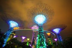 Μαγικός κήπος τη νύχτα, Σιγκαπούρη Στοκ εικόνα με δικαίωμα ελεύθερης χρήσης