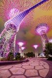 Μαγικός κήπος τη νύχτα, Σιγκαπούρη Στοκ Εικόνα