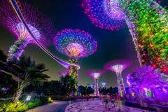 Μαγικός κήπος τη νύχτα, Σιγκαπούρη Στοκ Φωτογραφίες