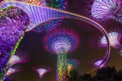 Μαγικός κήπος τη νύχτα, Σιγκαπούρη Στοκ φωτογραφίες με δικαίωμα ελεύθερης χρήσης