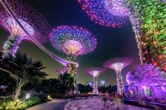 Μαγικός κήπος τη νύχτα, Σιγκαπούρη Στοκ Φωτογραφία