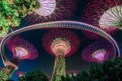 Μαγικός κήπος τη νύχτα, Σιγκαπούρη Στοκ εικόνες με δικαίωμα ελεύθερης χρήσης
