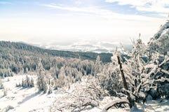 Μαγικός παγωμένος χειμώνας Στοκ Εικόνα