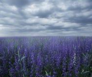Μαγικός τομέας με τα ιώδη λουλούδια στη misty ελαφριά ομίχλη στοκ εικόνα με δικαίωμα ελεύθερης χρήσης