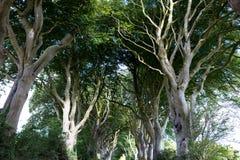 Μαγικό δάσος, Βόρεια Ιρλανδία Στοκ φωτογραφίες με δικαίωμα ελεύθερης χρήσης