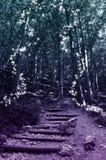 Μαγικό δάσος νεράιδων Στοκ Εικόνα