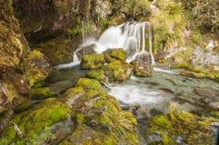 Μαγικό δάσος στη διαδρομή Routeburn, Νέα Ζηλανδία Στοκ φωτογραφίες με δικαίωμα ελεύθερης χρήσης