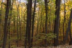 Μαγικό δάσος φθινοπώρου, χρώματα φθινοπώρου, δέντρα φθινοπώρου Στοκ Εικόνες