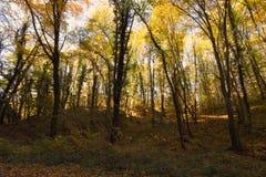 Μαγικό δάσος φθινοπώρου, χρώματα φθινοπώρου, δέντρα φθινοπώρου Στοκ Εικόνα