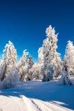 Μαγικό δάσος χιονιού Στοκ Εικόνες