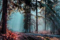 Μαγικό δάσος - χώρα των θαυμάτων - ομιχλώδες τοπίο Στοκ Εικόνες