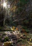 Μαγικό δάσος Στοκ Εικόνα