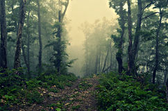 Μαγικό δάσος Στοκ Φωτογραφία