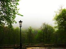 Μαγικό δάσος Στοκ φωτογραφίες με δικαίωμα ελεύθερης χρήσης
