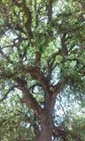 μαγικό δέντρο Στοκ Εικόνες