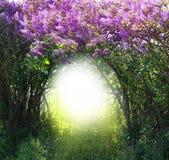Μαγικό δασικό τοπίο άνοιξη στοκ