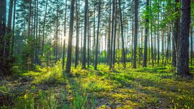 Μαγικό δάσος και ο ήλιος, χρόνος-σφάλμα με το γερανό απόθεμα βίντεο