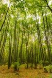 Μαγικό δάσος με τις ακτίνες ήλιων Πορεία στο δάσος, τα δέντρα, τη χλόη και τους θάμνους Μαγικά χρώματα Στοκ εικόνες με δικαίωμα ελεύθερης χρήσης