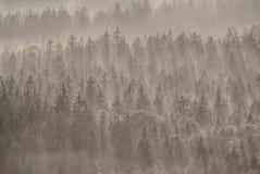 Μαγικό δάσος φθινοπώρου με τις ακτίνες ήλιων το πρωί στοκ εικόνα