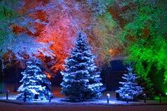 μαγικό δέντρο Χριστουγέννων στοκ εικόνα με δικαίωμα ελεύθερης χρήσης