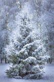 Μαγικό ζωντανό χριστουγεννιάτικο δέντρο στο άσπρο χιόνι στοκ εικόνες