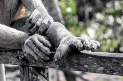 Μαγικό ζώο δάχτυλων Στοκ εικόνα με δικαίωμα ελεύθερης χρήσης