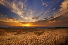 Μαγικό ηλιοβασίλεμα και ωριμασμένο σιτάρι στοκ φωτογραφίες