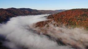 Μαγικό και ζωηρόχρωμο φθινόπωρο Carpathians, Ουκρανία Πρωί της Misty το φθινόπωρο απόθεμα βίντεο