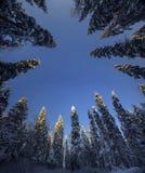 Μαγικό ξύλο Στοκ Φωτογραφίες