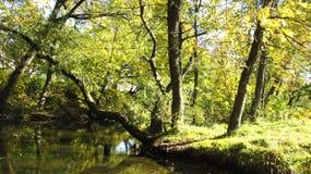 Μαγικό πρωί στο δάσος κοντά στον ποταμό στοκ εικόνες