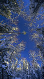 Μαγικό χειμερινό δάσος από το χαμηλό σημείο Στοκ Εικόνες