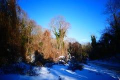 Μαγικό χειμερινό δέντρο Στοκ Εικόνες