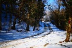 Μαγικό χειμερινό δέντρο Στοκ Φωτογραφίες