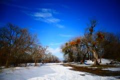 Μαγικό χειμερινό δέντρο Στοκ φωτογραφίες με δικαίωμα ελεύθερης χρήσης