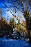 Μαγικό χειμερινό δέντρο Στοκ Εικόνα