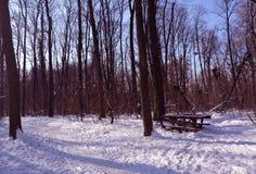 Μαγικό χειμερινό ροζ Στοκ φωτογραφίες με δικαίωμα ελεύθερης χρήσης