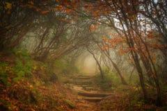 Μαγικό δάσος Στοκ φωτογραφία με δικαίωμα ελεύθερης χρήσης