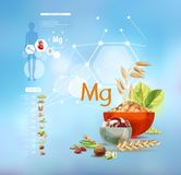 Μαγνήσιο Τρόφιμα με την υψηλότερη περιεκτικότητα σε μαγνήσιο διανυσματική απεικόνιση
