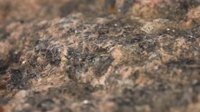 Μαγνητική πυξίδα με έναν μαύρο πίνακα σε μια άγρια πέτρα που καλύπτεται με το βρύο απόθεμα βίντεο