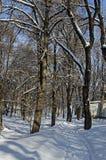 Μαγνητική χειμερινή σκηνή του δάσους που καλύπτεται με το νέο χιόνι στο πάρκο, Sofia Στοκ Φωτογραφία