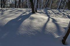Μαγνητική χειμερινή σκηνή του δάσους που καλύπτεται με το νέο χιόνι στο πάρκο, Sofia Στοκ εικόνες με δικαίωμα ελεύθερης χρήσης