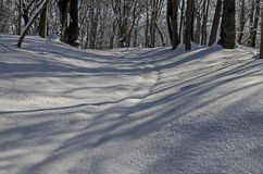 Μαγνητική χειμερινή σκηνή του δάσους που καλύπτεται με το νέο χιόνι στο πάρκο, Sofia Στοκ Εικόνα